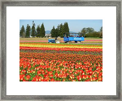 Tulip Wagon Framed Print by Karen Molenaar Terrell
