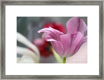 Tulip Whimsey Framed Print by Jennifer Apffel