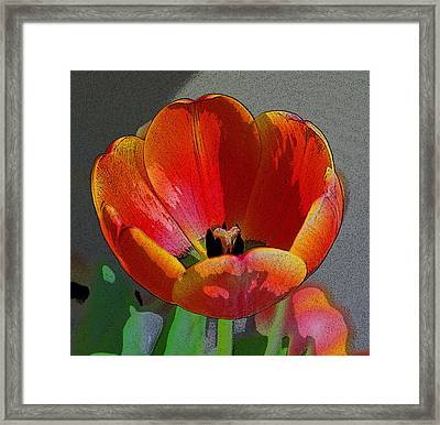 Tulip2 Framed Print by Valerie Timmons