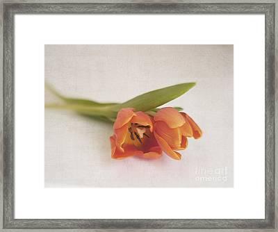 Tulipa Duo Framed Print by Irina Wardas