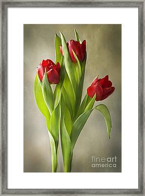 Tulipa Framed Print by Jacky Parker