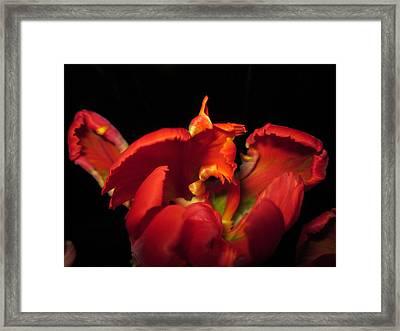 Tulipmelancholy Framed Print