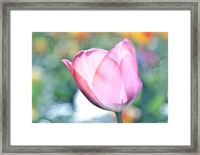 Tulipooty Framed Print