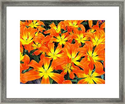 Framed Print featuring the photograph Tulips 1 by Gerry Bates