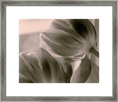 Tulips 2 Light Space Time  Botanicals Art Exhibition 2014  Special Merit Award Framed Print by Simone Ochrym