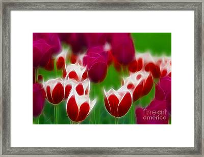 Tulips-6848-fractal Framed Print by Gary Gingrich Galleries