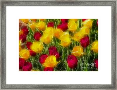 Tulips-7106-fractal Framed Print by Gary Gingrich Galleries