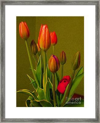 Tulips Against Green Framed Print