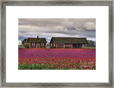 Tulips And Barns Framed Print by Mark Kiver
