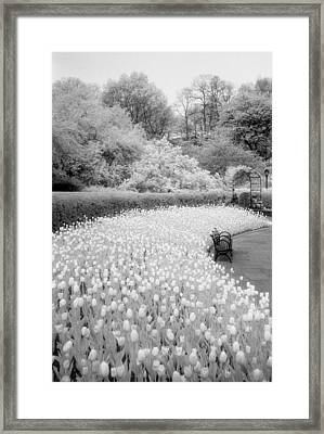 Tulips And Bench II Framed Print