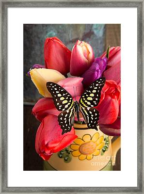 Tulips And Butterflies Framed Print by Edward Fielding