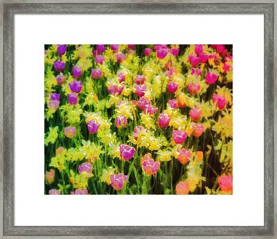 Tulips And Daffodils Framed Print by Jill Balsam