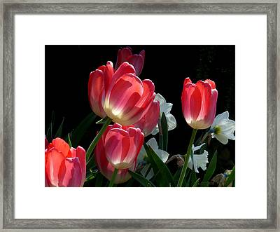Framed Print featuring the photograph Tulips And Daffodils by Lucinda Walter