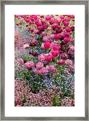 Tulips And Forget-me-nots Framed Print by Frank Townsley