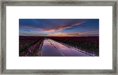 Tulips And Purple Skies Framed Print by Mike Reid