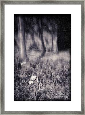 Tulips And Tree Shadow Framed Print by Silvia Ganora