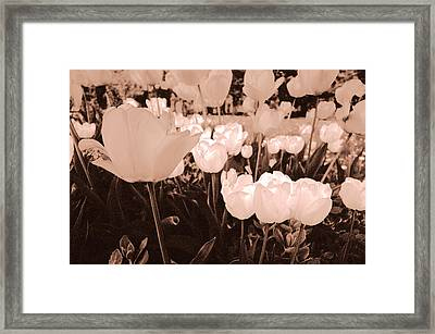 Framed Print featuring the photograph Tulips by Arkady Kunysz