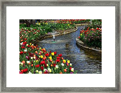 Tulips Around The Pond Framed Print