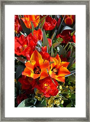 Tulips At The Pier Framed Print
