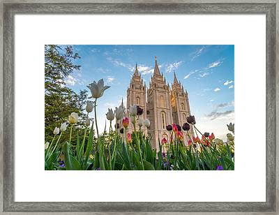 Tulips At The Temple Framed Print