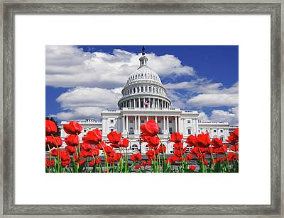 Tulips Bloom In Front Of The Capitol Framed Print by Jaynes Gallery
