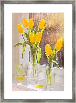 Tulips Framed Print by Amanda Elwell