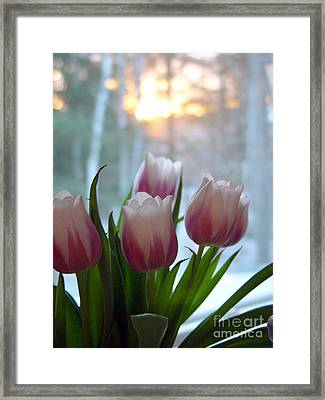 Tulips Framed Print by Christopher Mace