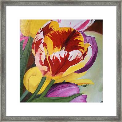 Tulips Framed Print by Claudia Goodell