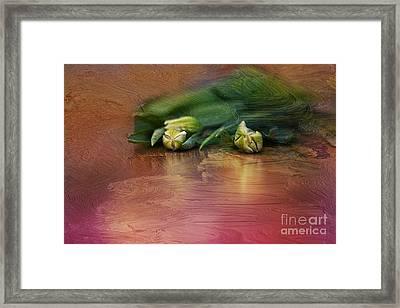 Tulips Creamy  Framed Print by Izabela Kaminska
