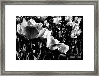 Tulips Framed Print by Dariusz Gudowicz