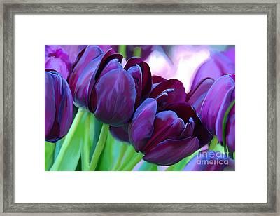 Tulips-dark-purple Framed Print