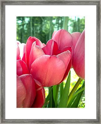 Tulips Framed Print by Elizabeth Fredette