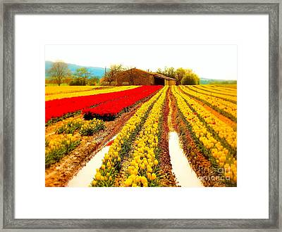 Tulips Field In Provence By A Farm Stone House France Framed Print by Flow Fitzgerald