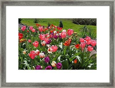 Tulips Garden Art Prints Colorful Spring Floral Framed Print by Baslee Troutman