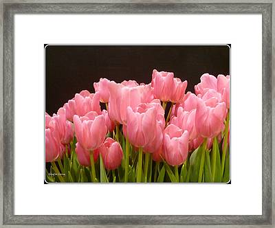 Tulips In Bloom Framed Print