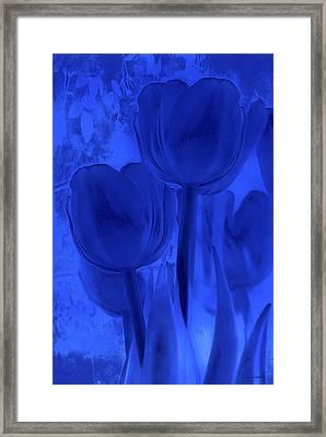 Tulips In Cobalt Blue Framed Print