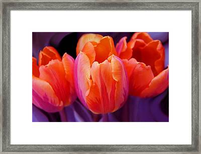 Tulips In Orange And Purple Framed Print by Jennie Marie Schell