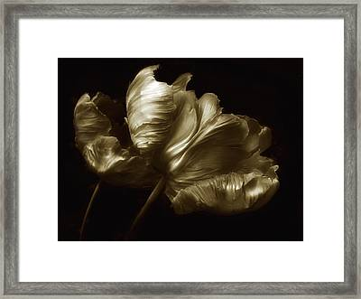 Tulips In Sepia Framed Print