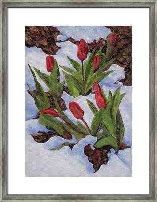 Tulips In Snow Framed Print