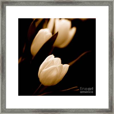 Tulips In Study 2 Framed Print by Cathy Dee Janes