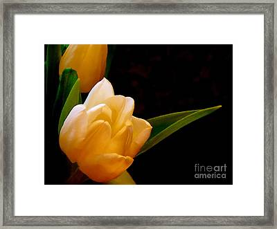 Tulips In Study 3 Framed Print by Cathy Dee Janes