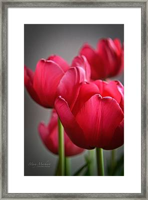 Tulips In The  Morning Light Framed Print by Mary Machare