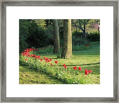 Framed Print featuring the photograph Tulips In The Park by Jose Oquendo