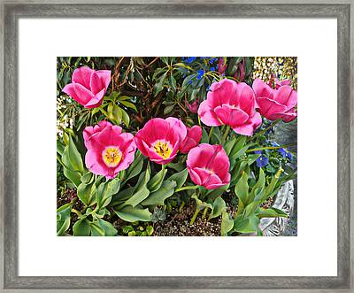 Tulips In The Park Framed Print by Muriel Levison Goodwin