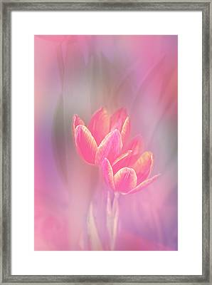 Tulips In The Pink Framed Print by Mary Timman