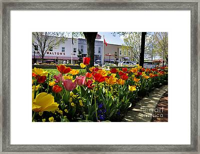 Tulips In The Spring Framed Print