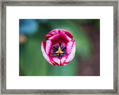 Tulip's Inner Sanctum Framed Print