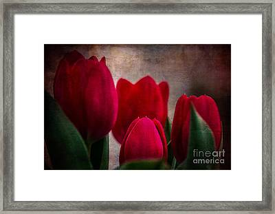 Tulips Framed Print by Judy Wolinsky
