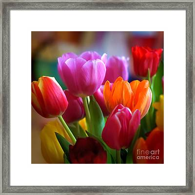 Tulips Light Framed Print