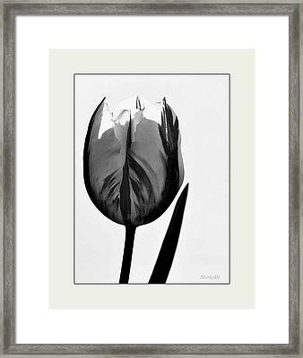 Framed Print featuring the photograph The Light Within by Marija Djedovic